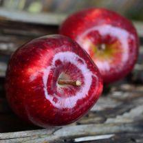 Rød Æble Sirup 920 ml